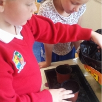 4th class Planting Spring daffodil bulbs in October
